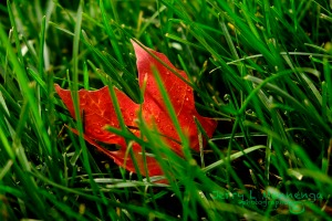 As Fall arrives a little color is beginning to show in Vermillion, South Dakota,  Saturday, Sept. 19, 2015. (photo by Jerry L Mennenga©)