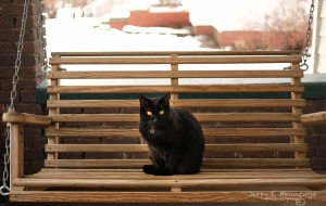 Small Fry sitting on the porch swing Dec. 5, 2015, enjoying a warming trend for the week. (Photo by Jerry L Mennenga ©)