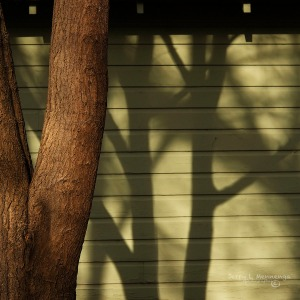 Tree shadow in Sioux City, Iowa, Sunday, April 10, 2016.  (photo by Jerry L Mennenga©)