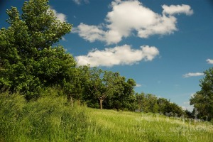 Summer is a chance to explore places like the Five Ridges Prairie Reserve off of Hwy 12 in rural Plymouth County, Iowa Wednesday, June 1, 2016.  (photo by Jerry L Mennenga©)