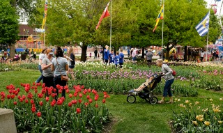 Guest and residents all looking for photo ops among the tulips at the Tulip Festival in Orange City, Iowa Tuesday, May 19, 2016. (photo by Jerry L Mennenga©)