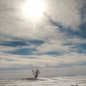A tree in a field in rural Plymouth County, Iowa Monday, Jan. 30, 2017.   (photo by Jerry L Mennenga©)